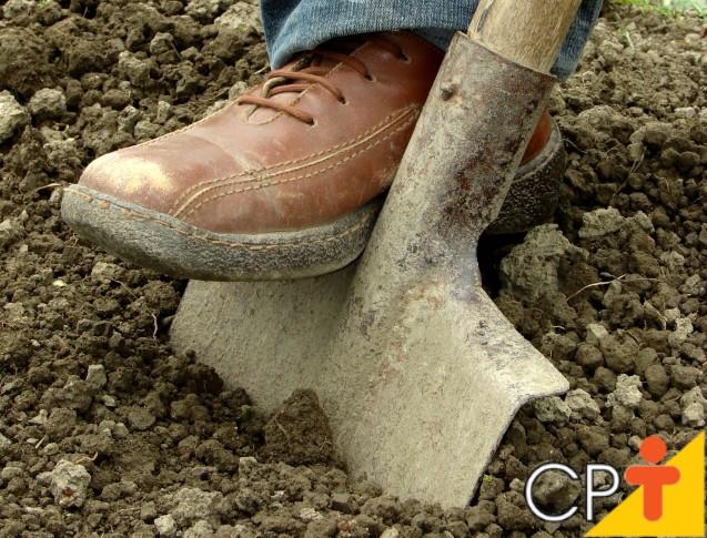 Vou plantar milho. Com que frequência devo fazer a amostragem do solo?   Dicas Cursos CPT