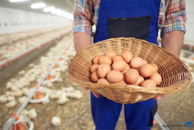Cesta cheia de ovos