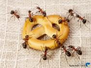 Dicas para acabar de vez com a infestação de formigas na sua casa