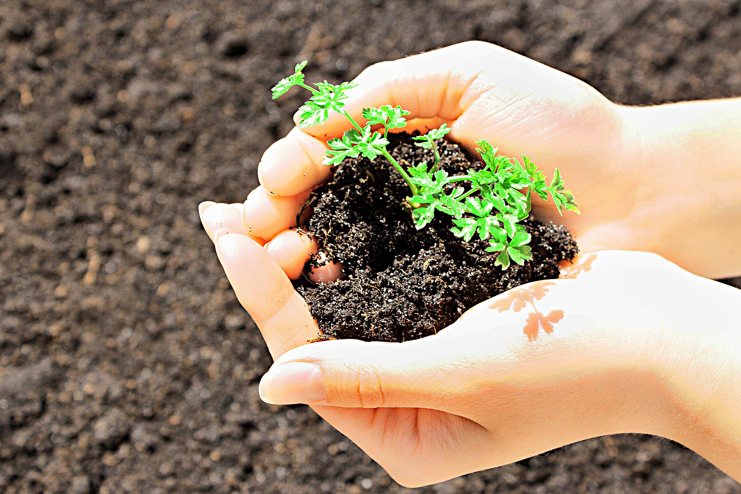 Plantas espontâneas são o verdadeiro laboratório do solo   Dicas Cursos CPT