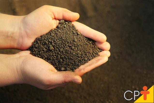 Plantio de milho: época ideal e como fazer a amostragem do solo   Artigos Cursos CPT