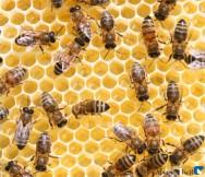 Na apicultura, Piauí encontra uma alternativa para enfrentar a estiagem