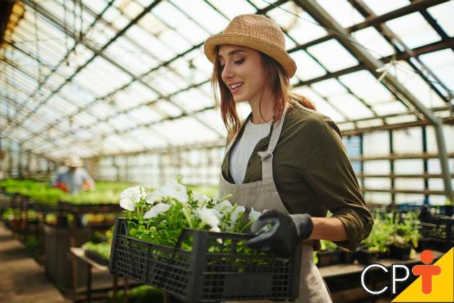 O comércio de flores e plantas ornamentais está em alta no Brasil   Notícias Cursos CPT