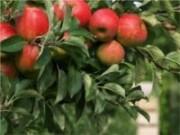 Brasil terá record de produção agrícola