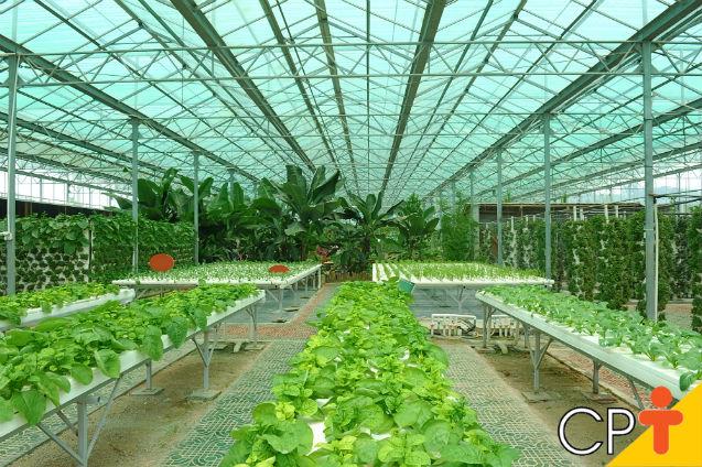 Horticultura orgânica em estufas: controle fitossanitário   Dicas Cursos CPT