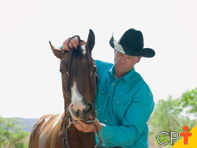 Qual a melhor embocadura para domar cavalos?   Dicas Cursos CPT