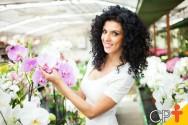 Podridão Negra: como combatê-la em orquídeas?