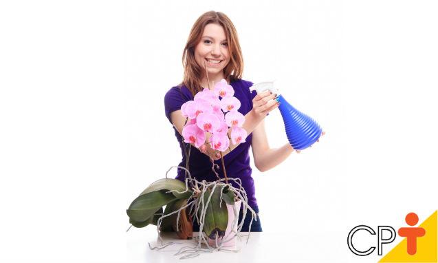 Baratinha Vermelha em orquídeas: como combatê-las?   Dicas Cursos CPT