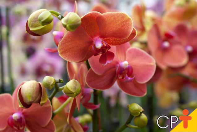 Conheça alguns dos segredos para a produção de orquídeas   Dicas Cursos CPT