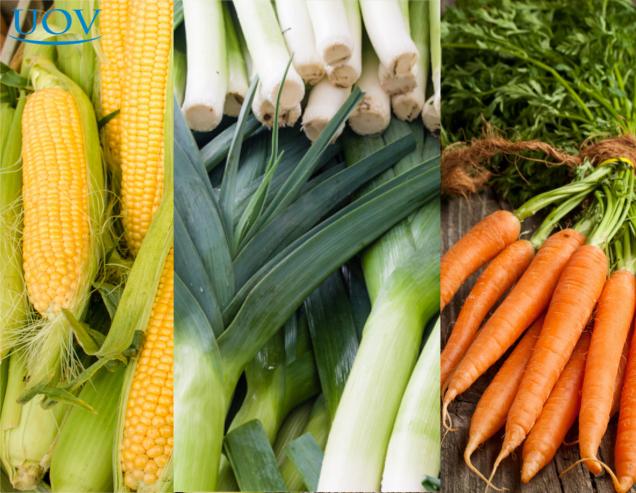 Milho, Alho-poró e Cenoura