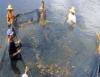 Camarão marinho tem mercado e preços atrativos para os produtores