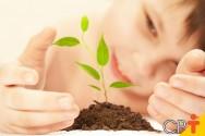 Qual a importância do solo para as plantas e vegetais?