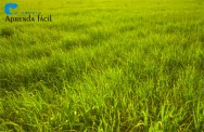 A adubação verde e suas vantagens