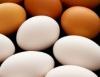 Galinhas poedeiras devem possuir boa taxa de postura e ovos de bom tamanho