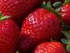 O morango é uma fruta comercializada o ano todo