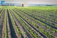 Produtos fitossanitários - Herbicidas