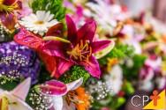 Decorar com plantas: quadros verdes ou painéis vivos