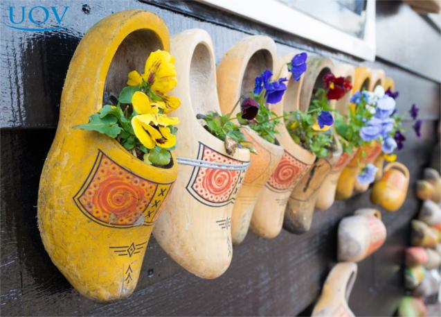 Sapatos de cerâmica com plantas, em jardim vertical
