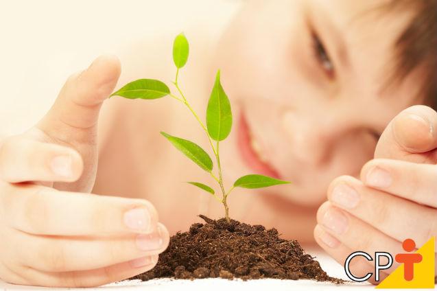 Como trabalhar o tema Seres Vivos com crianças?   Artigos Cursos CPT