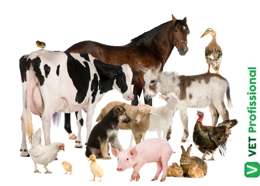 Nova disciplina Anatomia Veterinária – Osteologia e Miologia de Animais Domésticos