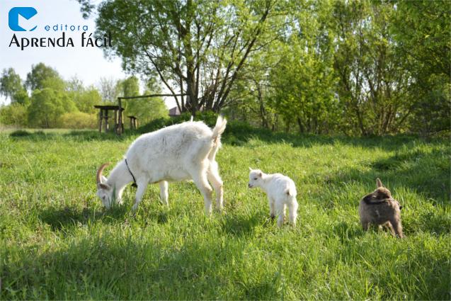 Cabra e filhotes