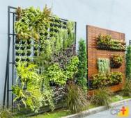 Jardim vertical: informações e dicas