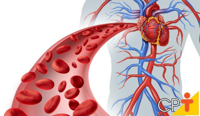 Sistema Circulatório: características principais   Artigos Cursos CPT