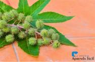 Top 5 plantas tóxicas de importância pecuária