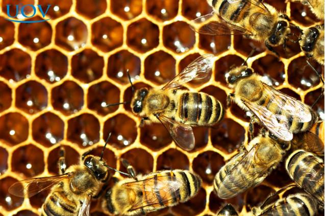 Abelhas nos favos de mel