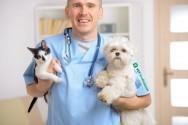 09 de setembro – Dia do Médico Veterinário