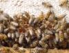 Rentabilidade com a apicultura está cada vez maior