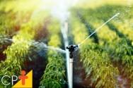 Solos saturados são propícios ao desenvolvimento de plantas?