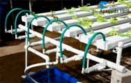 Produção de mudas para cultivo hidropônico