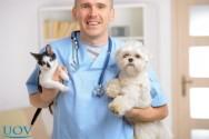Veterinário Profissional - Conheça a Disciplina Cirurgias em Cães e Gatos