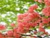 Flores da primavera colorem, perfumam e alegram os jardins