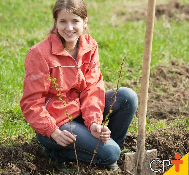 Quer plantar frutas em seu quintal? Veja como preparar o solo   Artigos Cursos CPT