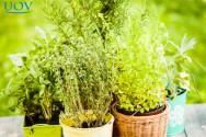 Conheça as principais plantas medicinais
