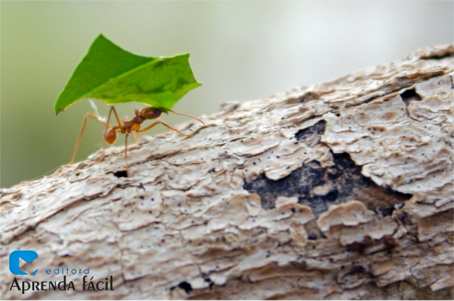 Formiga corta-folhas
