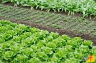 Oito passos para fazer uma horta orgânica