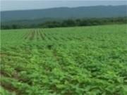 Oficinas de capacitação para produtores rurais
