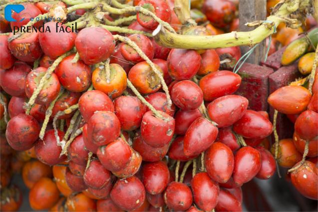 Frutos pupunha
