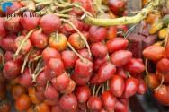 Como preparar o solo para cultivar pupunha?