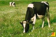 Melhoramento genético pode diminuir emissão de gases do efeito estufa em 35%