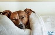 É saudável dormir com animais de estimação na cama?