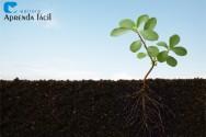 Preparando o solo para o pomar: o que é a subsolagem?