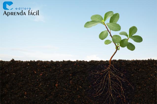Planta com raízes
