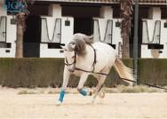 Quais são as linhagens de cavalo para competições?