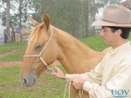 O horsemanship dispensa o uso de força na doma de cavalos