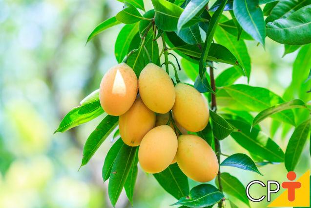 Por que trabalhar com mudas de árvores frutíferas? Porque dá lucro!   Artigos Cursos CPT