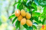 Por que trabalhar com mudas de árvores frutíferas? Porque dá lucro!